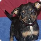 Adopt A Pet :: Claire