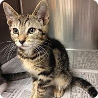 Adopt A Pet :: Taylor Swift - East Brunswick, NJ