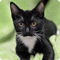 Adopt A Pet :: Evan151428 - Atlanta, GA