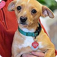 Adopt A Pet :: Princess - Novato, CA