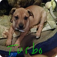 Adopt A Pet :: Turbo - Richmond, VA
