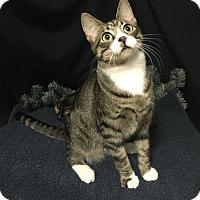 Adopt A Pet :: Scamper - Fayetteville, GA