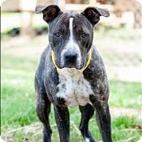 Adopt A Pet :: 16-03-0790 Ashley - Dallas, GA