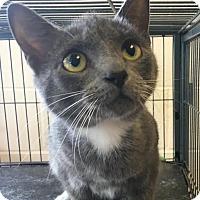 Adopt A Pet :: Ingrid - Gadsden, AL