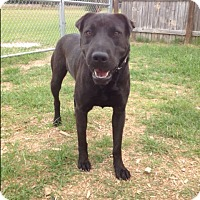 Adopt A Pet :: Spud - Barnwell, SC