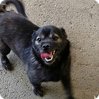 Adopt A Pet :: OTIS - Gustine, CA