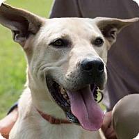 Adopt A Pet :: Jeter - Sarasota, FL