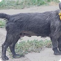 Adopt A Pet :: Bonny - Woonsocket, RI