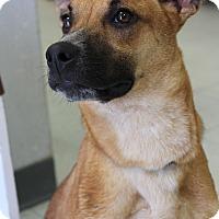 Adopt A Pet :: Dove - Penngrove, CA