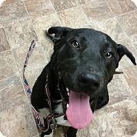 Adopt A Pet :: Duke - Darlington, SC