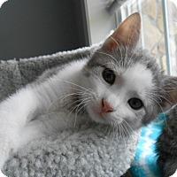 Adopt A Pet :: Juneau - Whitehall, PA