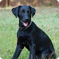 Adopt A Pet :: Stella - Woodstock, GA