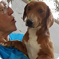 Adopt A Pet :: Dandy - Baileyton, AL