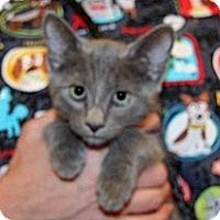 Adopt A Pet :: Francine - Wildomar, CA