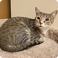 Adopt A Pet :: Claire - Athens, GA