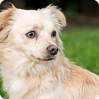 Adopt A Pet :: Ipswich - San Diego, CA