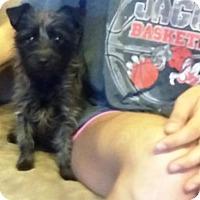 Adopt A Pet :: **BRIDGETT - Peralta, NM