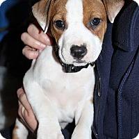 Adopt A Pet :: Waylon - Durham, NC