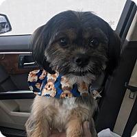 Adopt A Pet :: Riley - Tenafly, NJ
