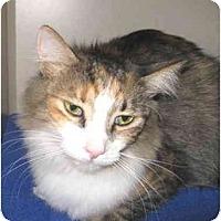 Adopt A Pet :: Squeaks - Mesa, AZ