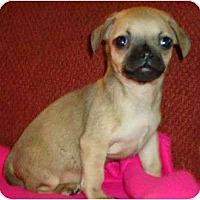 Adopt A Pet :: Haden - Allentown, PA