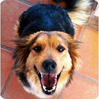 Adopt A Pet :: DELLA - Gilbert, AZ
