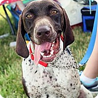 Adopt A Pet :: Tucker - Streetsboro, OH