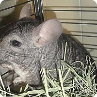 Adopt A Pet :: Cam - Titusville, FL