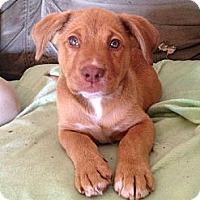 Adopt A Pet :: Cash - Homewood, AL
