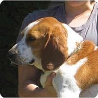 Adopt A Pet :: Baxter - Blairstown, NJ