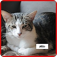 Adopt A Pet :: Milo - Miami, FL