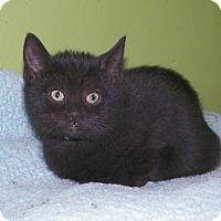 Adopt A Pet :: Krispy - Dover, OH