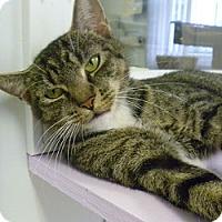 Adopt A Pet :: Penny Kitty - Hamburg, NY