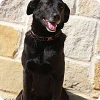 Adopt A Pet :: Mac - Georgetow, TX