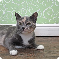 Adopt A Pet :: Carnation - Red Wing, MN