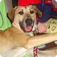 Adopt A Pet :: (CL) Copper - Brentwood, TN