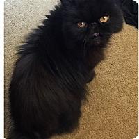 Adopt A Pet :: Iris - Hampton, VA