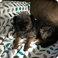 Adopt A Pet :: Uriel - McKinney, TX