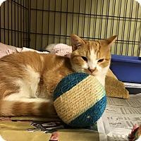 Adopt A Pet :: Romeo - Island Park, NY
