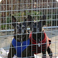 Adopt A Pet :: Harley and Mosh - meriden, CT