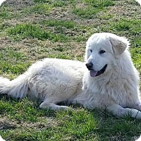 Adopt A Pet :: Marc - Enfield, CT