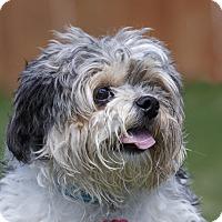 Adopt A Pet :: JIA JIA - Ile-Perrot, QC