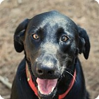 Adopt A Pet :: Black Beauty - Minneola, FL
