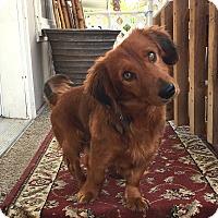 Adopt A Pet :: Rusty - La Quinta, CA