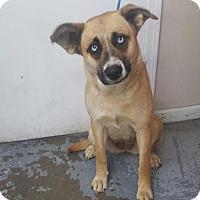 Adopt A Pet :: 4504 - Calhoun, GA