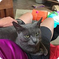 Adopt A Pet :: Cinders Ella - Cincinnati, OH