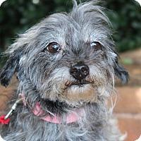 Adopt A Pet :: DeeDee - Atlanta, GA