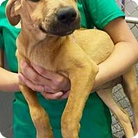 Adopt A Pet :: Madison - Barnegat, NJ