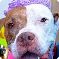 Adopt A Pet :: Gypsy - Tucson, AZ