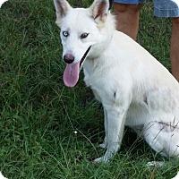 German Shepherd Dog Mix Dog for adoption in Seattle, Washington - A - KJ